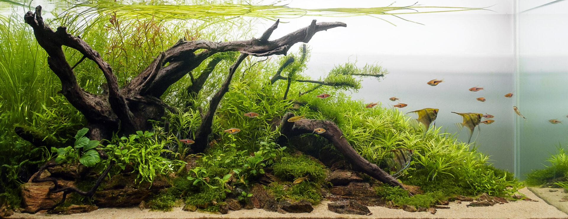vloeibare plantenvoeding aquarium all in one alles in een