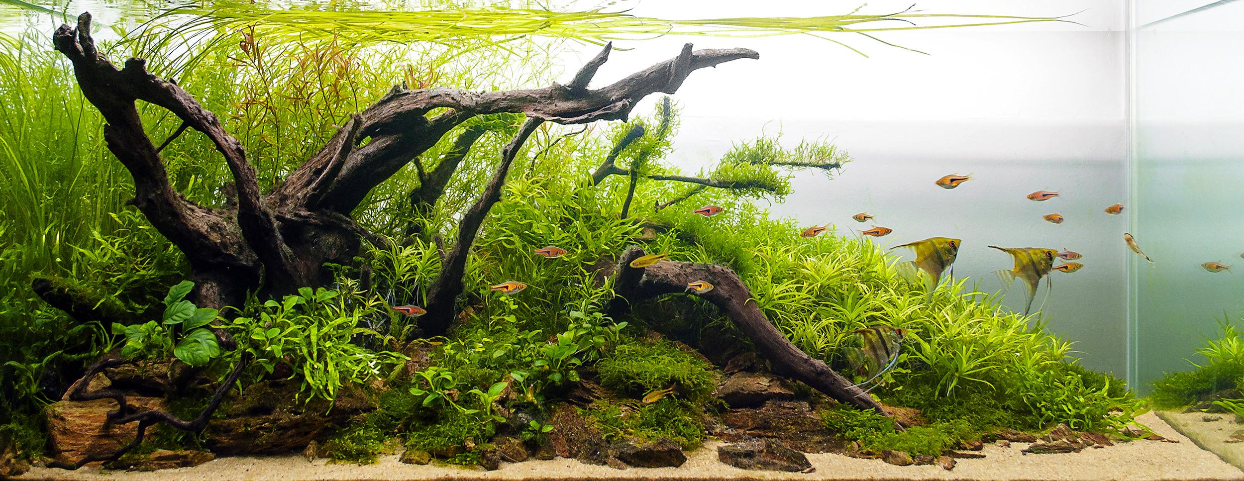 aqua synergy , plantenvoeding , aquarium,waterbehandeling ,optimizer,biologisch evenwicht, balans, optimaal , webshop, webwinkel